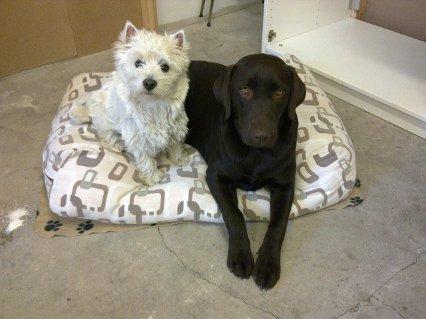 Hundene Coco og Bell
